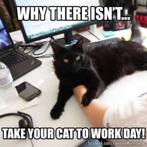 catworkday
